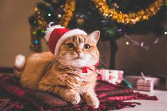 Red cat wears Santa`s hat lying under Christmas tree. Christmas and New year concept stock images