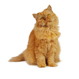 Red cat. On a white background stock images