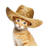 Red cat in wicker straw hat Stock Photos