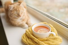 The red cat smells a hot cup of tea in a scarf on a window sill. Red cat at a window with a hot cup of tea royalty free stock photo