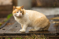 Red cat in the yard. Nature. Royalty Free Stock Image