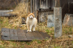 Red cat in the yard of the rural house. Nature. Royalty Free Stock Photography