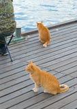 Red cats near the sea Stock Photo