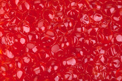 The red caviar as background. Stock Photo