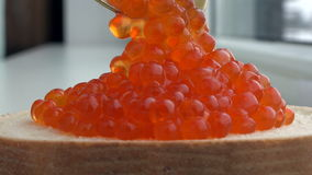 Red caviar dripping from a spoon and iron rests on a sandwich.  stock video footage