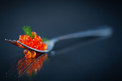 Red caviar on a fork Royalty Free Stock Image