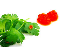 Red caviar  on a green leaf of parsley Stock Photos