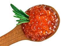 Red caviar heap in wooden spoon with rosemary Stock Photography