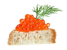 Red caviar sandwich with dill twig Stock Photos