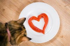 Red caviar in the shape of  heart on a plate and curious cat. Royalty Free Stock Photography