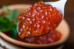 Red caviar in spoon. Close up Stock Photo
