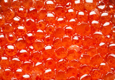 Red caviar texture Royalty Free Stock Images