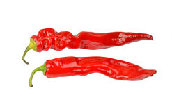 Red cayenne chili pepper Stock Photography