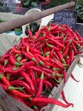 Red Cayenne Peppers farmers market Royalty Free Stock Image