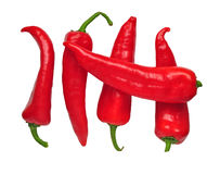 Red cayenne Royalty Free Stock Photography