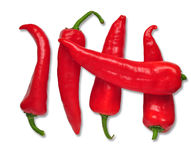 Red cayenne Stock Images