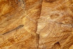 Red cedar stump background royalty free stock images
