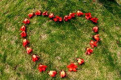 Red ceiba kapok flower heart Royalty Free Stock Images