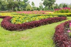 Red Celosia argentea Stock Photo