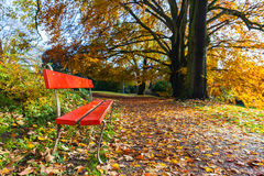Red chair with golden tree and leaves in autumn Royalty Free Stock Image