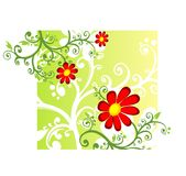 Red chamomile. Red decorative flowers on a yellow-green background Stock Photo