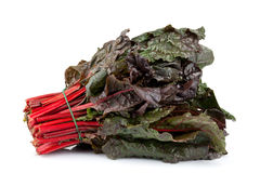 Red Chard Stock Image