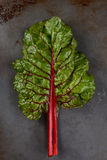 Red Chard Leaf Royalty Free Stock Photo