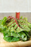 Red chard leaves Royalty Free Stock Image