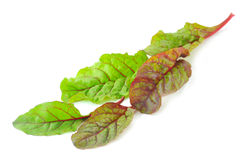 Red Chard salad leaves Stock Photos