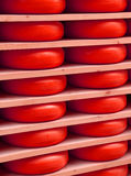 Red cheese during ripening on the shelves of the dairy mountain. Red cheese during ripening on the shelves Royalty Free Stock Photo