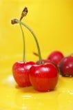 Red cherries Stock Photography