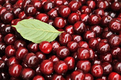 Red cherries background. Sweet red cherries background with a leaf Stock Photography