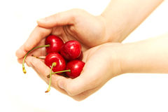 Red cherries. In children's hands are red cherries, green twigs, with two branches, one without twigs, the stem is green, white background, photograph taken at Stock Photography
