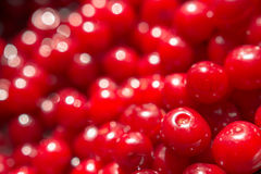 Red Cherries Close Up In Fruit Market Royalty Free Stock Photography