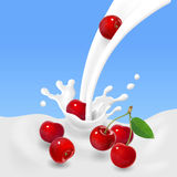 Red cherries falling into the milky splash or yogurt. Vector illustration.  Stock Photos