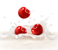 Red cherries fruits falling into the milky splash. Royalty Free Stock Photography