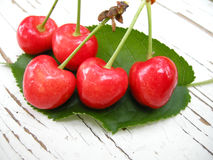 Red cherries on leaf Royalty Free Stock Image