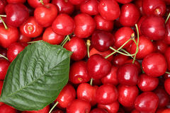 Red cherries with a leaf forming a background Royalty Free Stock Image