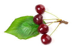 Red cherries on leaf Stock Image