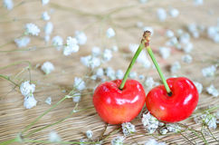 Red cherries with small white flowers Royalty Free Stock Photography