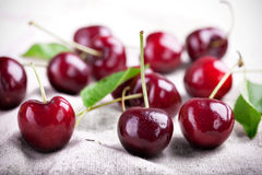 Red cherries. Some fresh red cherries, fresh harvested Royalty Free Stock Photography