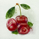Red cherries watercolor painting on a white background. Red cherries with leaves watercolor painting on a white background Royalty Free Stock Image