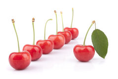 Red cherries. On a white background Stock Photography