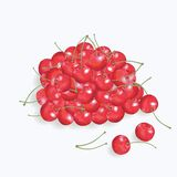 Red cherries on the  white background Royalty Free Stock Photos