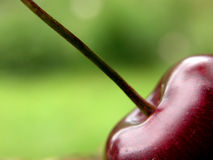 Red cherry stock image