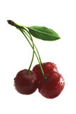 Red cherry. On the white background Stock Image