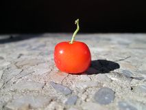A red cherry being heated by the sun. Royalty Free Stock Photography