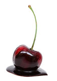 Red cherry in chocolate dipped isolated Royalty Free Stock Photography