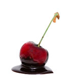 Red cherry in chocolate dipped isolated Stock Photography
