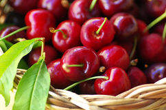 Red cherry fruit Royalty Free Stock Photo